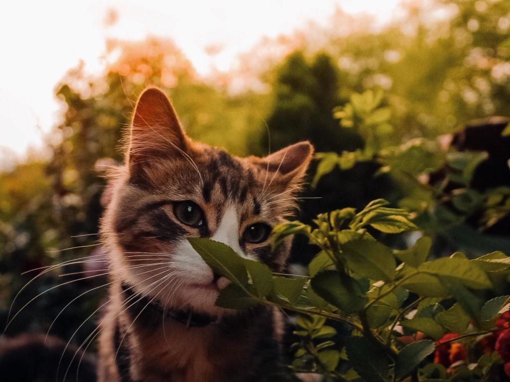 Desktop Wallpaper Cute Baby Cat Feline Hd Image Picture Background 9fb7be