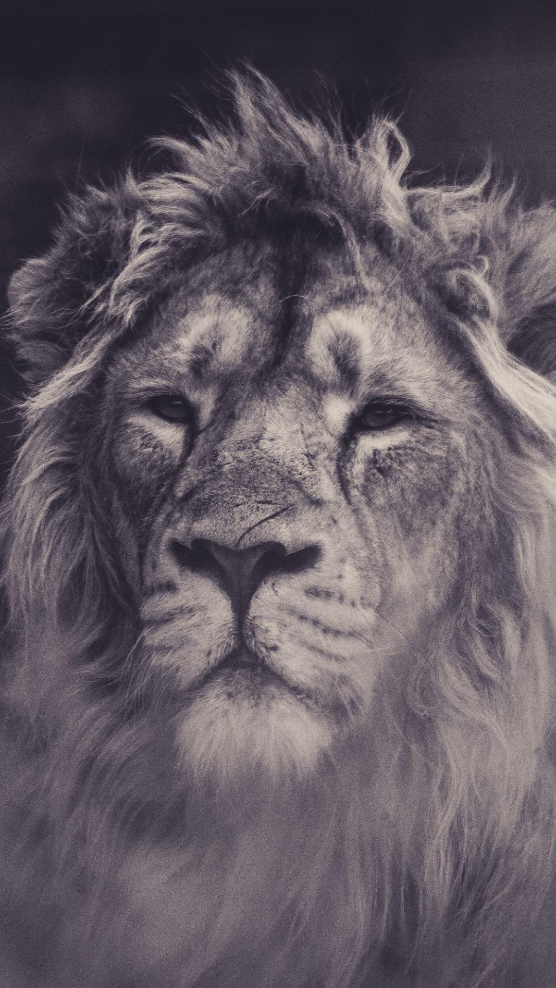 Lion, calm, predator, muzzle, 1080x1920 wallpaper
