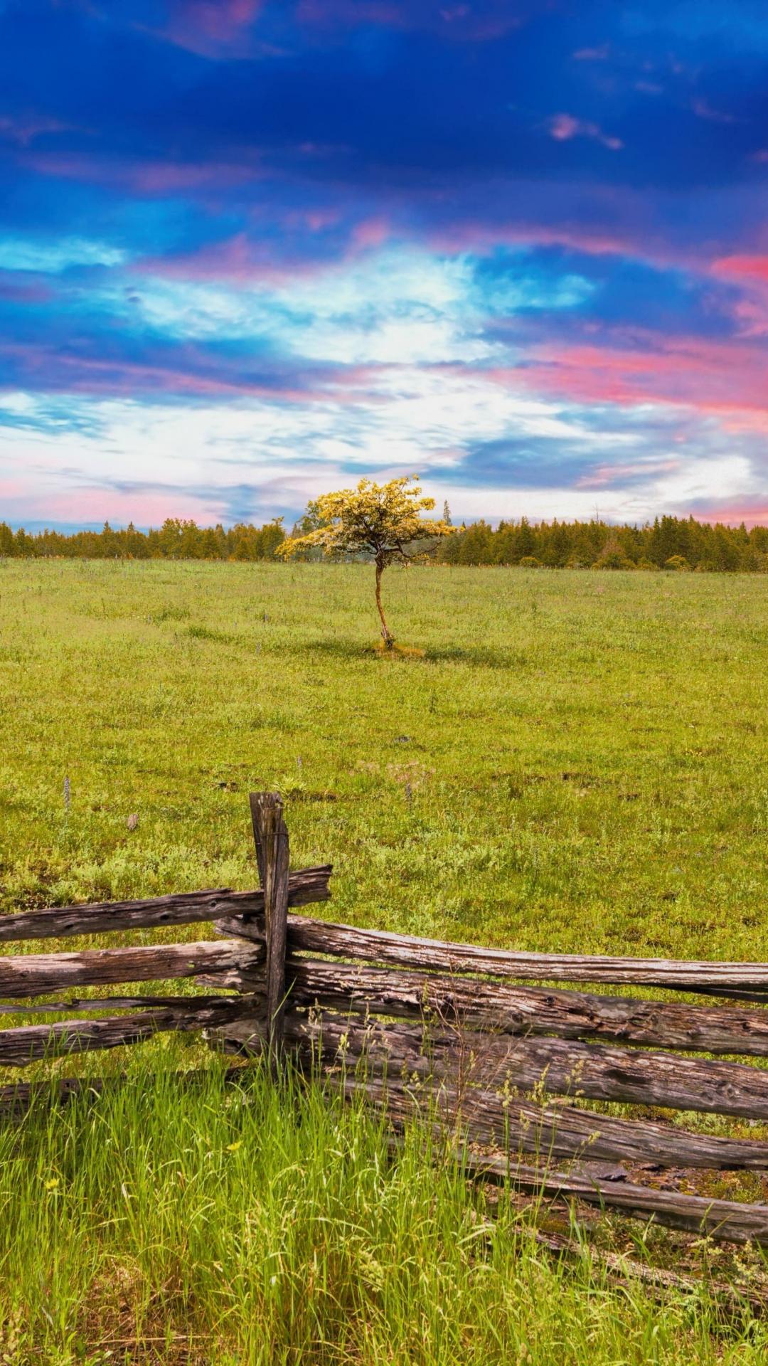 Downaload Wooden Fence Landscape Tree Skyline Nature Wallpaper