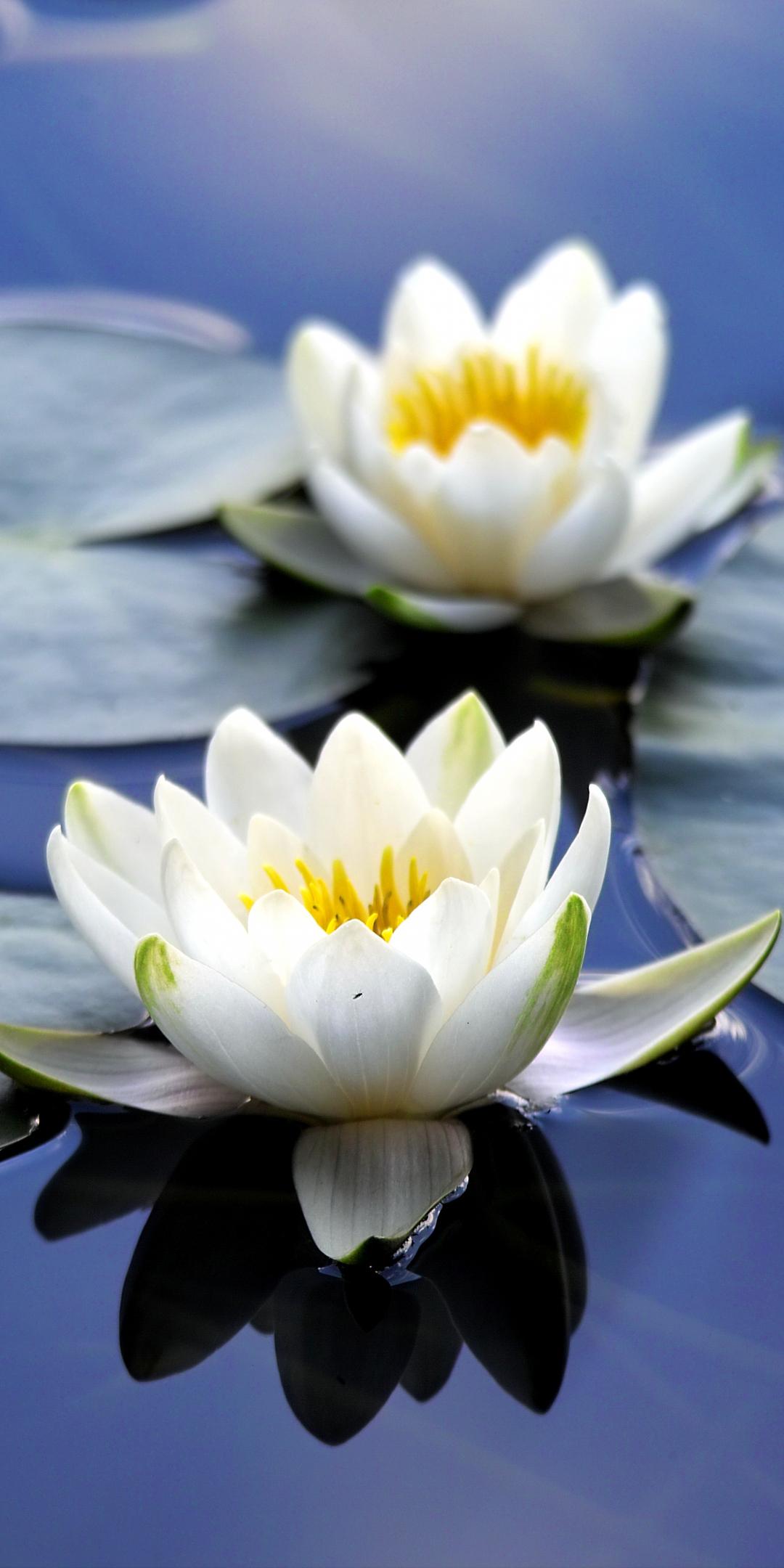 Download 1080x2160 wallpaper flora, white flowers, close ...