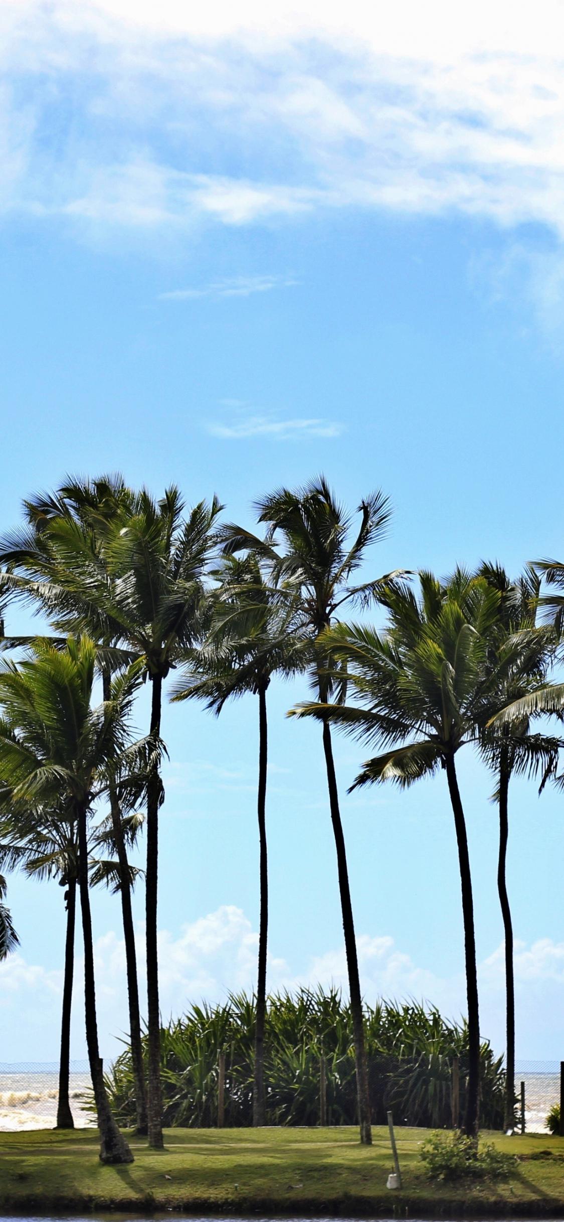 Download 1125x2436 Wallpaper Palm Trees Blue Sky Coast