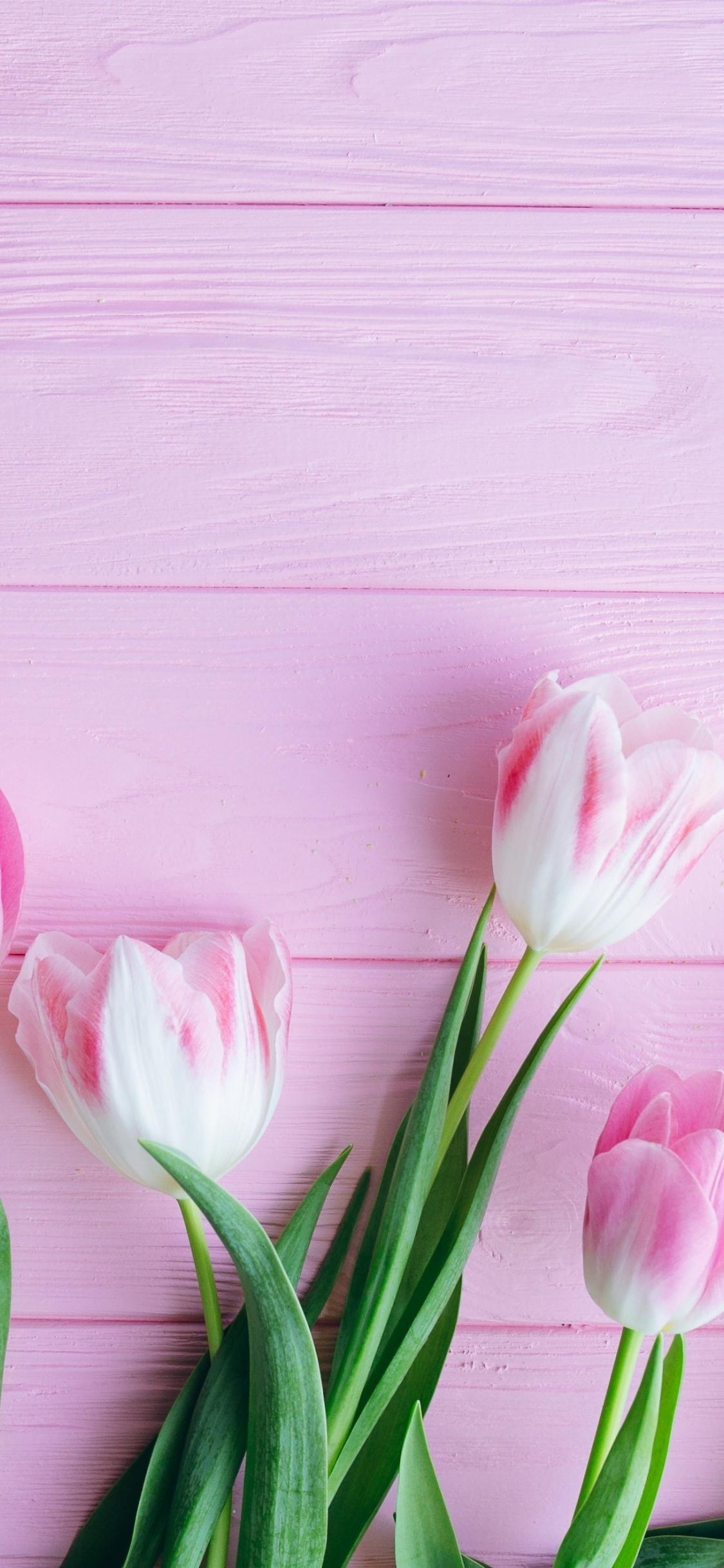 Download 1125x2436 Wallpaper Tulip Flowers Fresh Iphone X