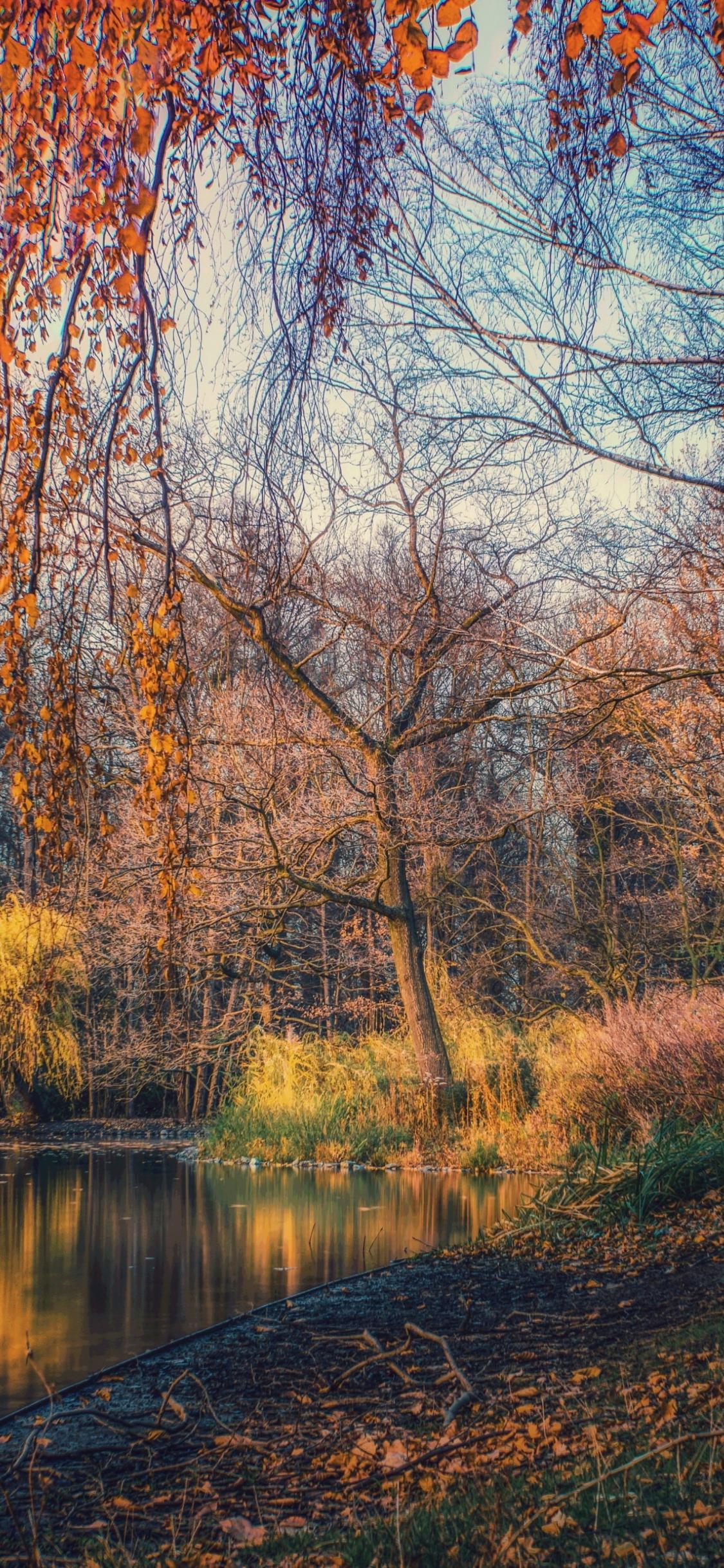 Download 1125x2436 Wallpaper Lake Nature Tree Autumn