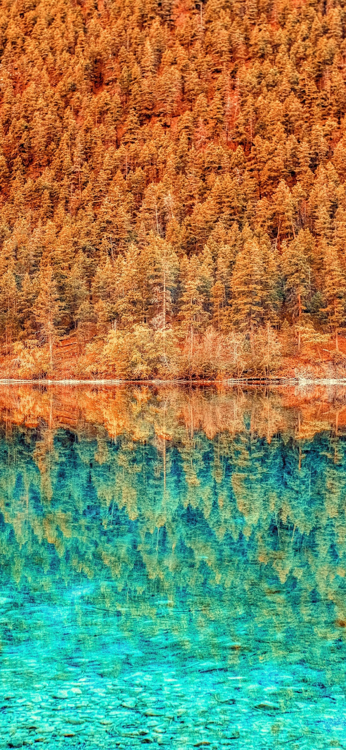 Download 1125x2436 Wallpaper Trees Lake Forest Autumn