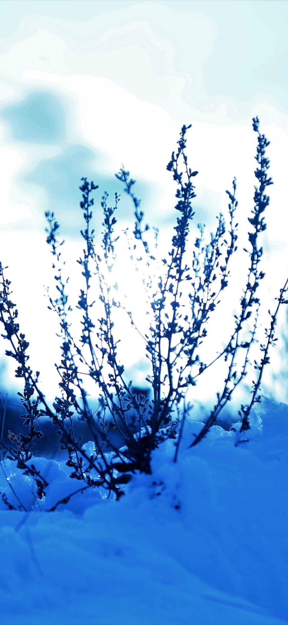 Download 1125x2436 wallpaper snow cover, plants, winter, landscape ...