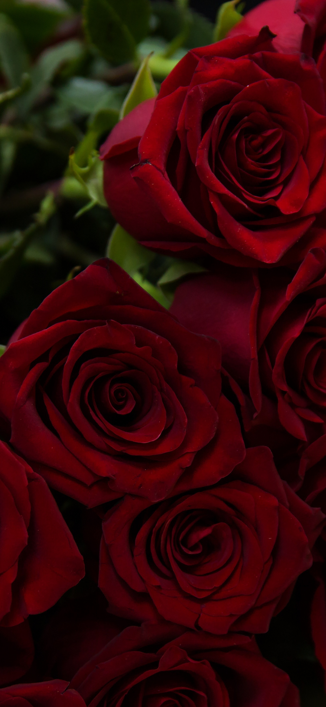Download 1125x2436 Wallpaper Beautiful Flowers Red Roses Iphone X