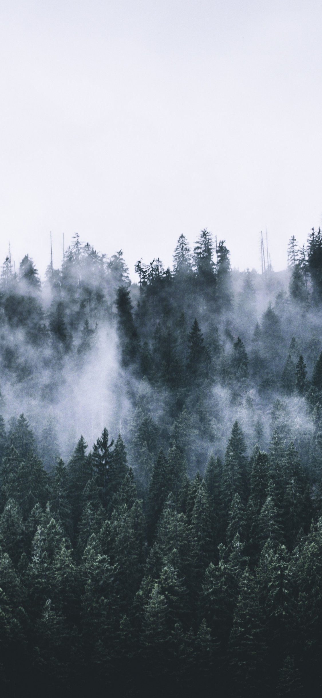 Download 1125x2436 Wallpaper Green Forest Fog Nature Trees Dawn