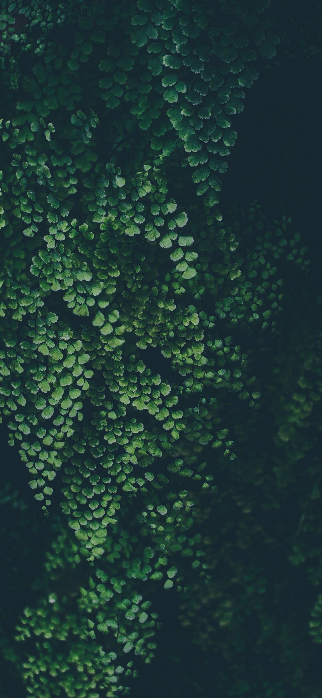 Download 1125x2436 Wallpaper Green Leaves Clover Nature