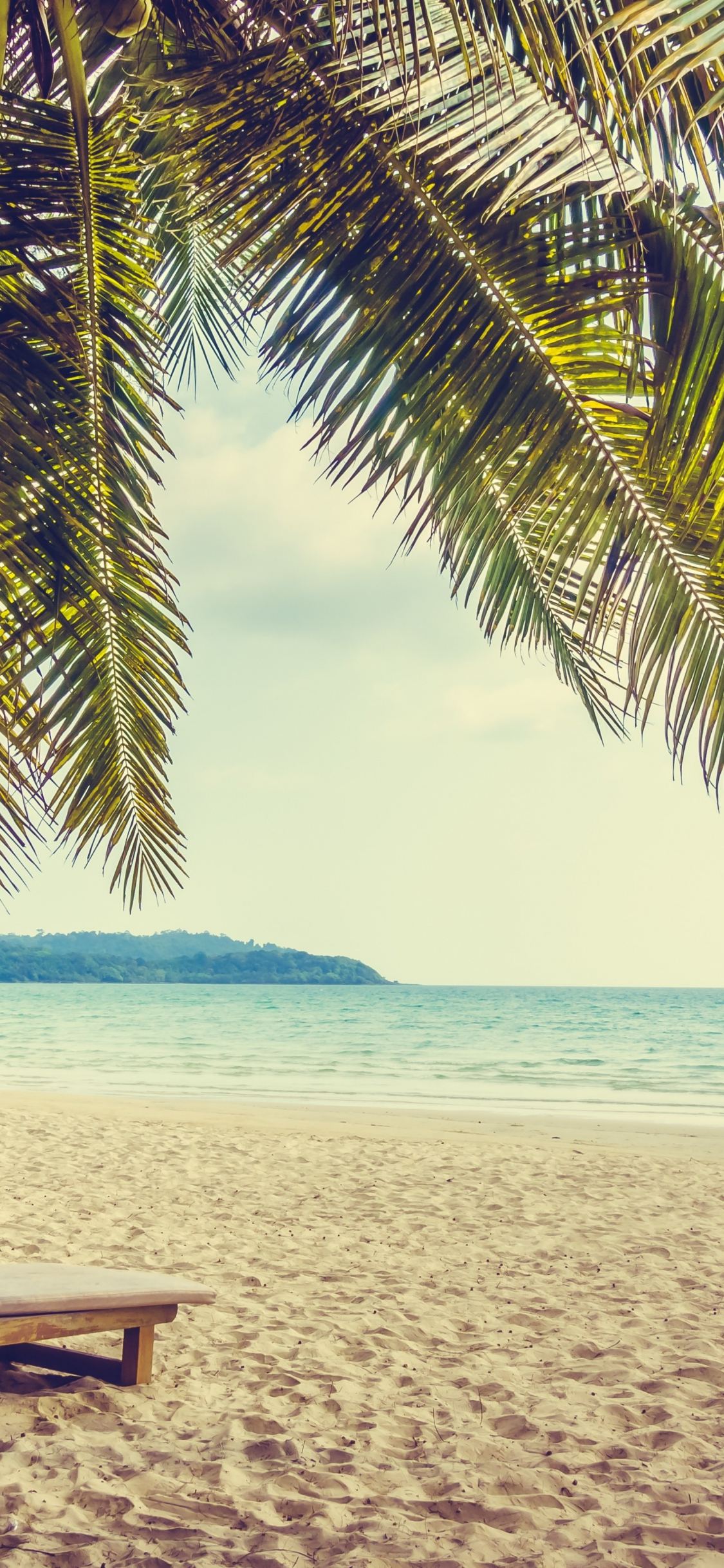 Download 1125x2436 Wallpaper Palm Tree Beach Sand Holiday Summer
