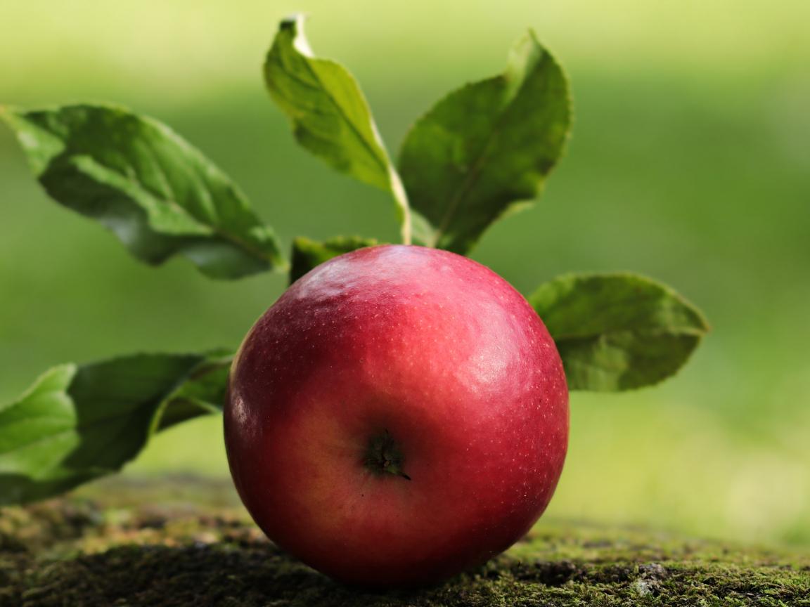 Apple, fruit, close up, 1152x864 wallpaper