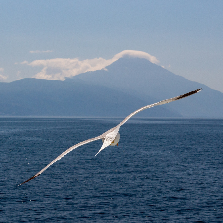 White bird, flight, sea, seagull, 1224x1224 wallpaper