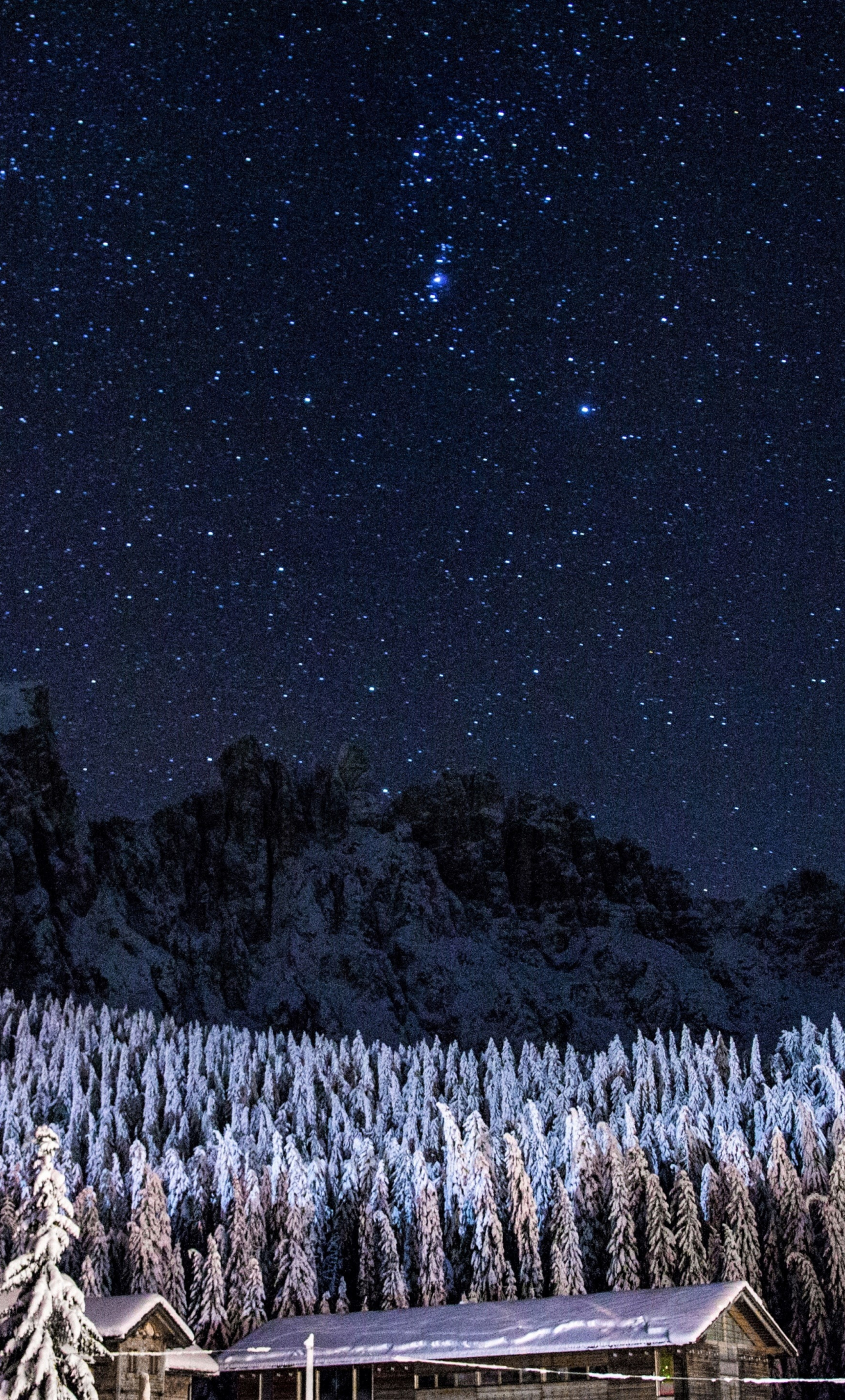 Download 1280x2120 Wallpaper Trees Forest Starry Night