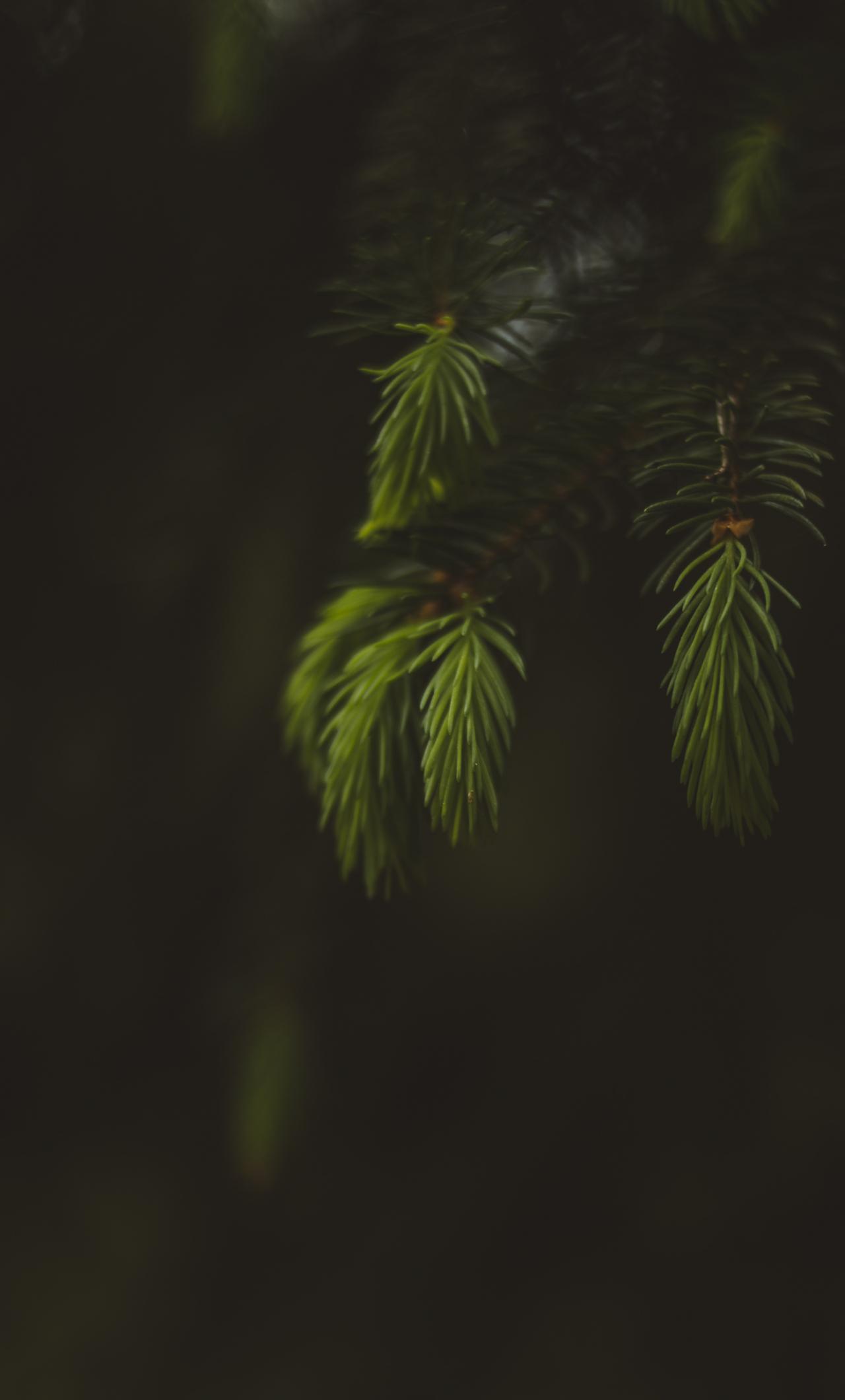 Blur, portrait, leaf, fern, 1280x2120 wallpaper