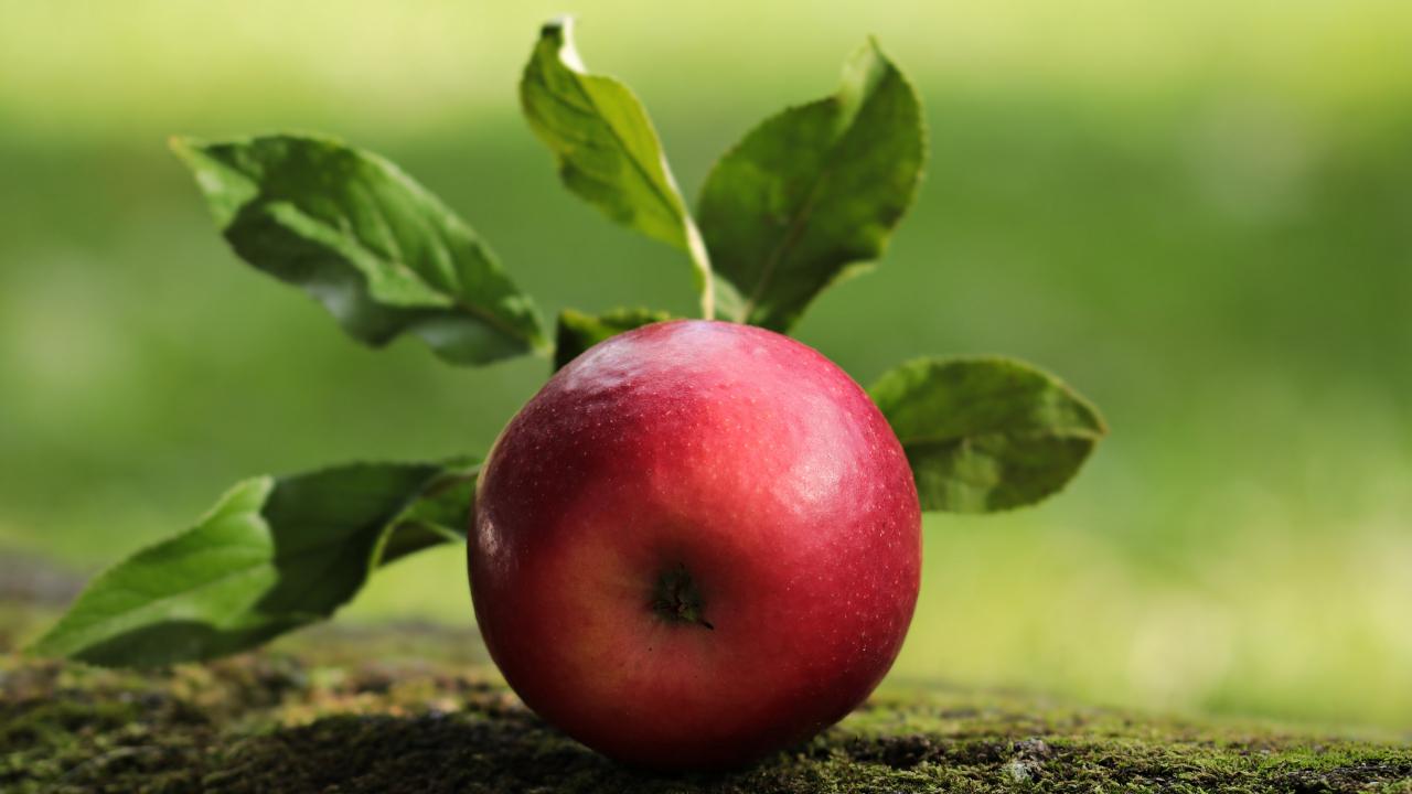Apple, fruit, close up, 1280x720 wallpaper