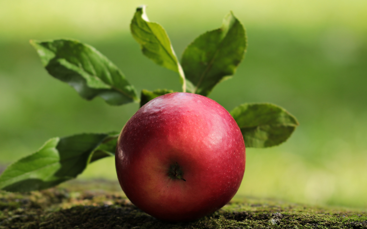 Apple, fruit, close up, 1280x800 wallpaper