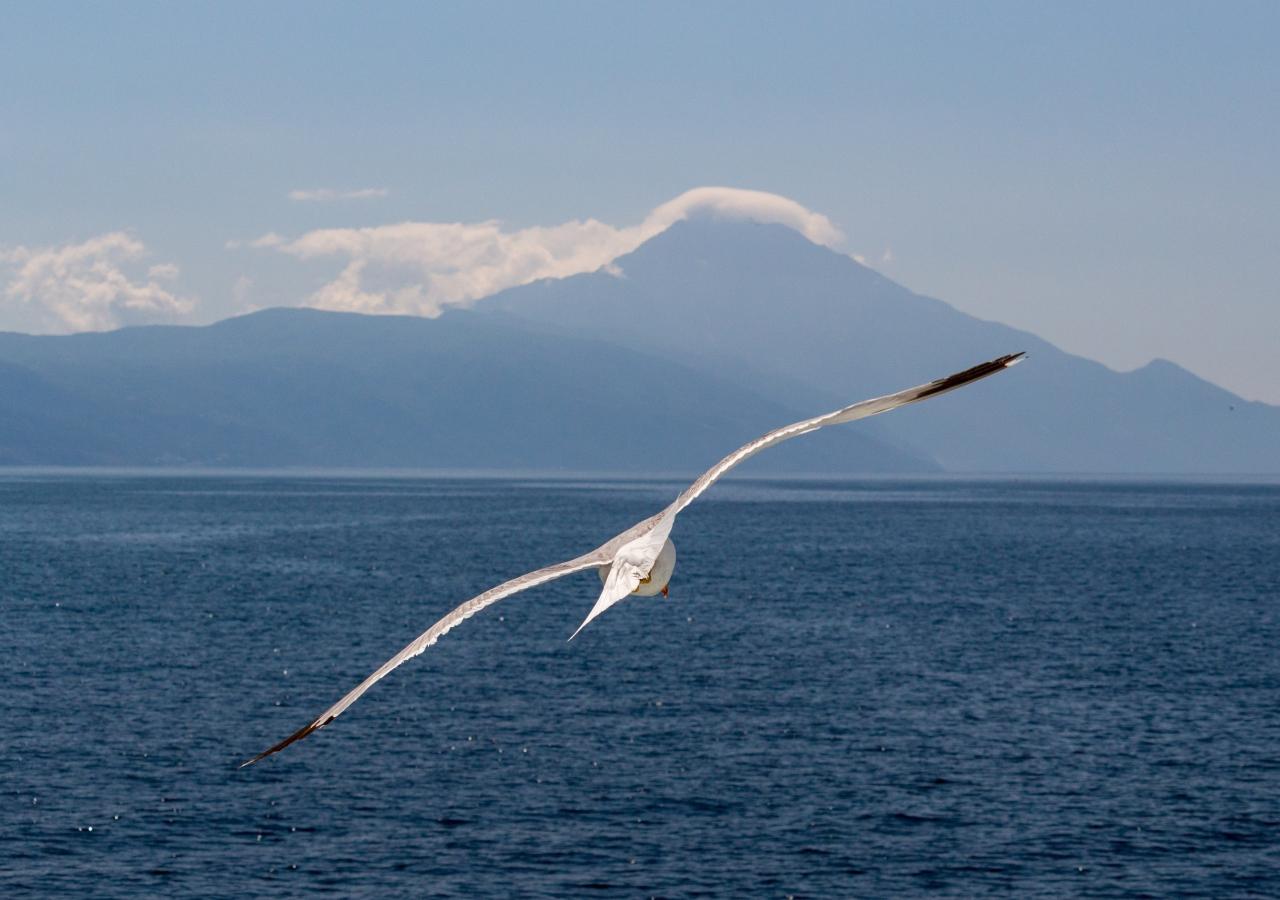 White bird, flight, sea, seagull, 1280x900 wallpaper