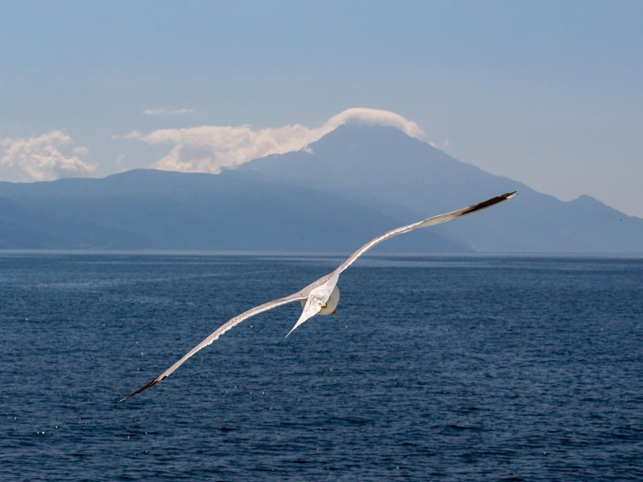 White bird, flight, sea, seagull, 1280x960 wallpaper