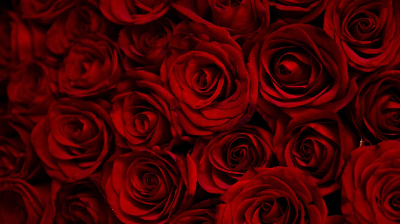 Download 1366x768 Wallpaper Dark Red Roses Decorative Tablet