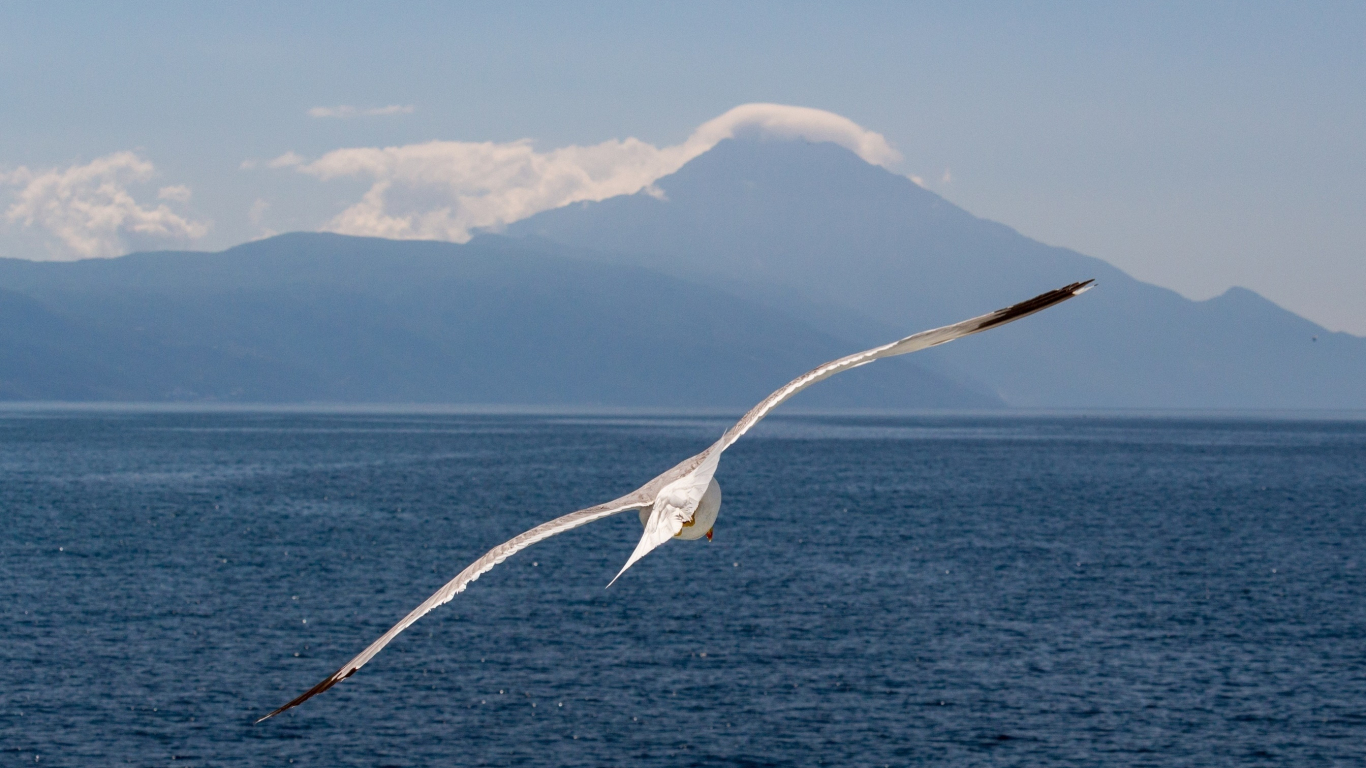 White bird, flight, sea, seagull, 1366x768 wallpaper