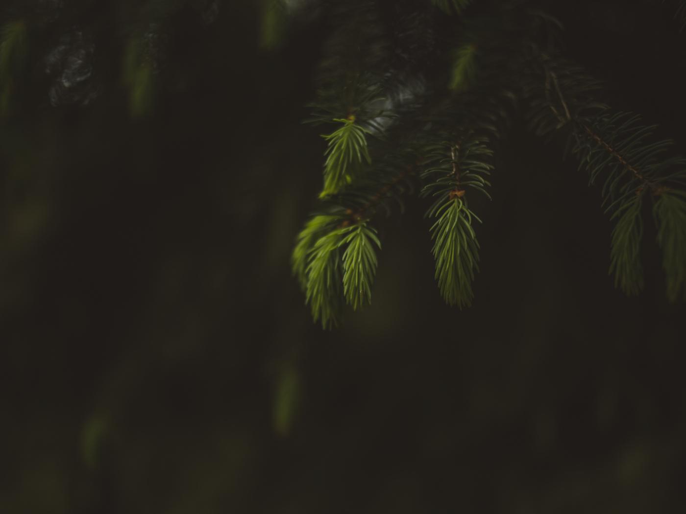 Blur, portrait, leaf, fern, 1400x1050 wallpaper