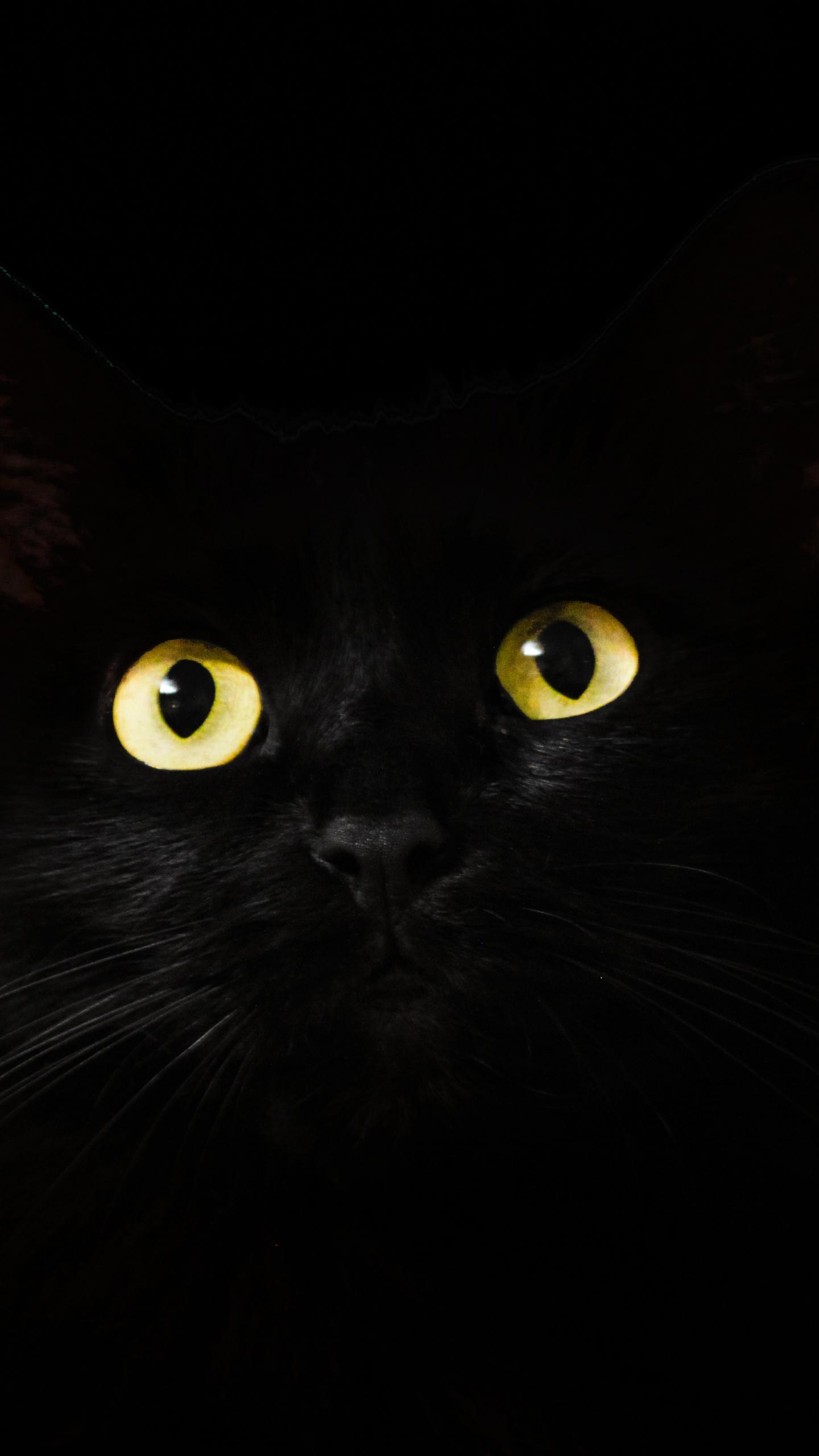 Download 1440x2560 wallpaper black cat, muzzle, animal, yellow eyes, qhd samsung galaxy s6, s7
