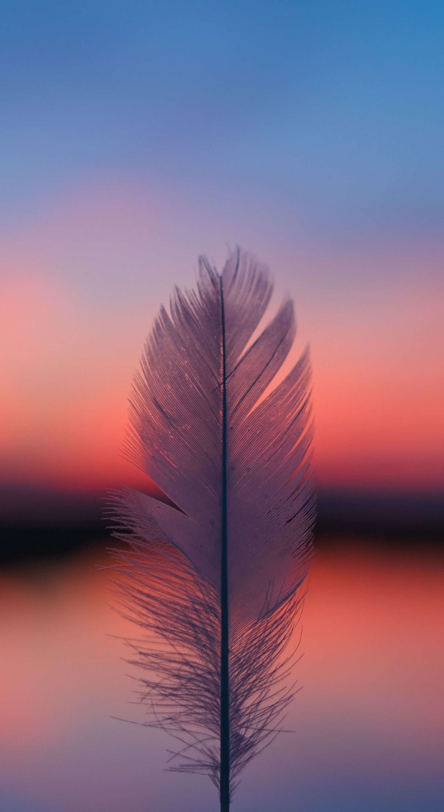 Download 1440x2630 Wallpaper Feather Focus Blur Sunset Samsung Galaxy Note 8 1440x2630 Hd Image Background 22016