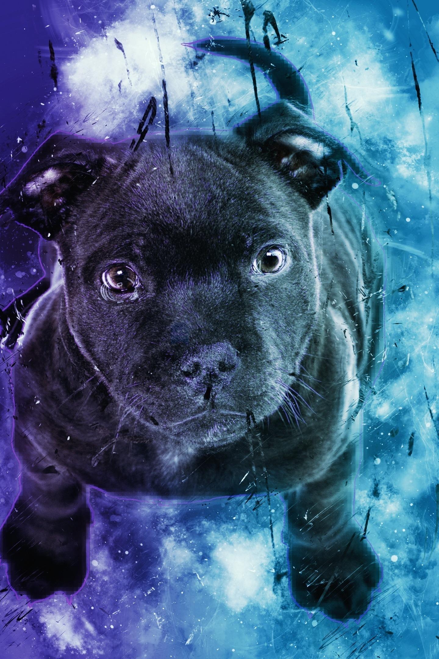 black puppy digital art