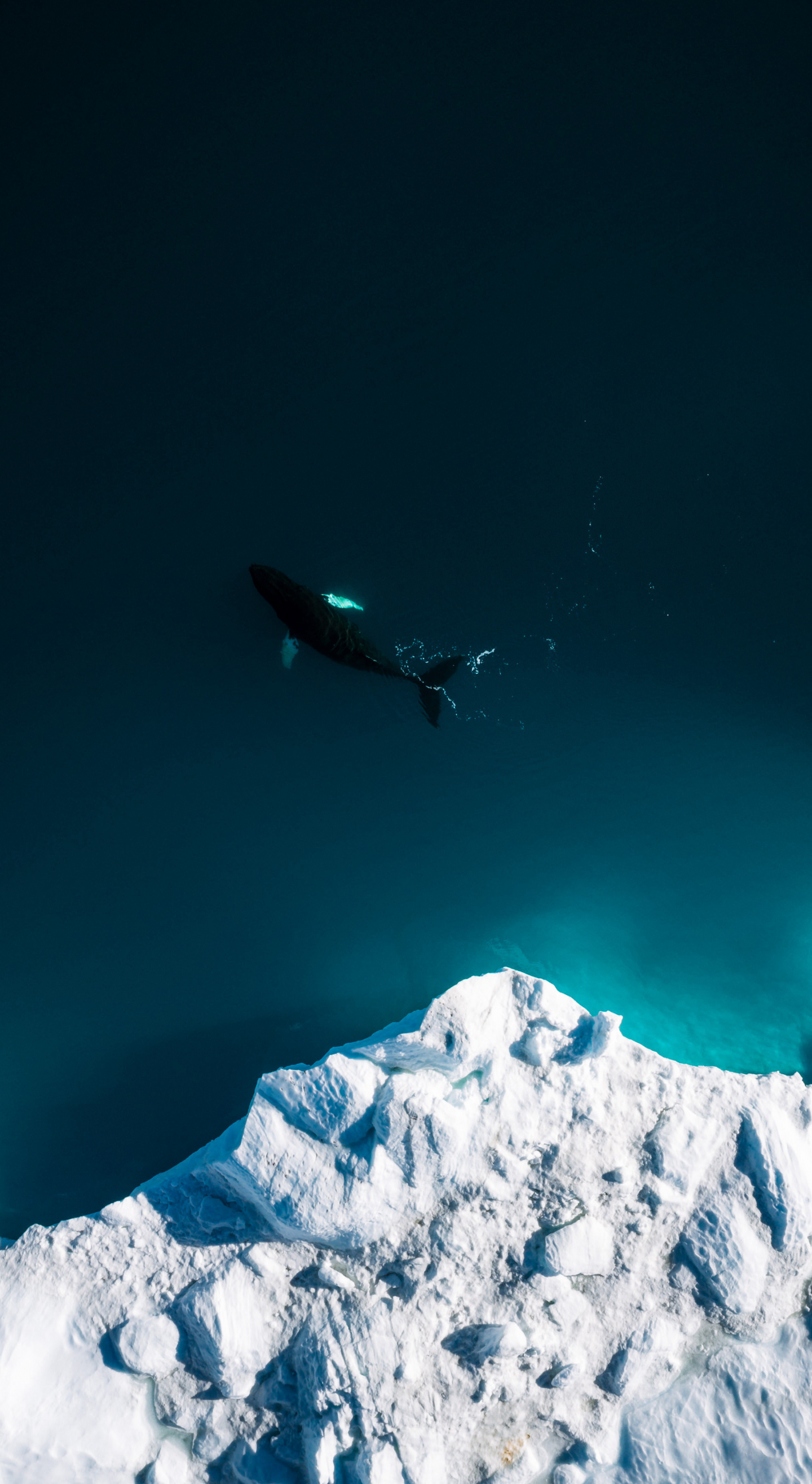Download 1440x2630 Wallpaper Aerial Shot Iceberg Whale