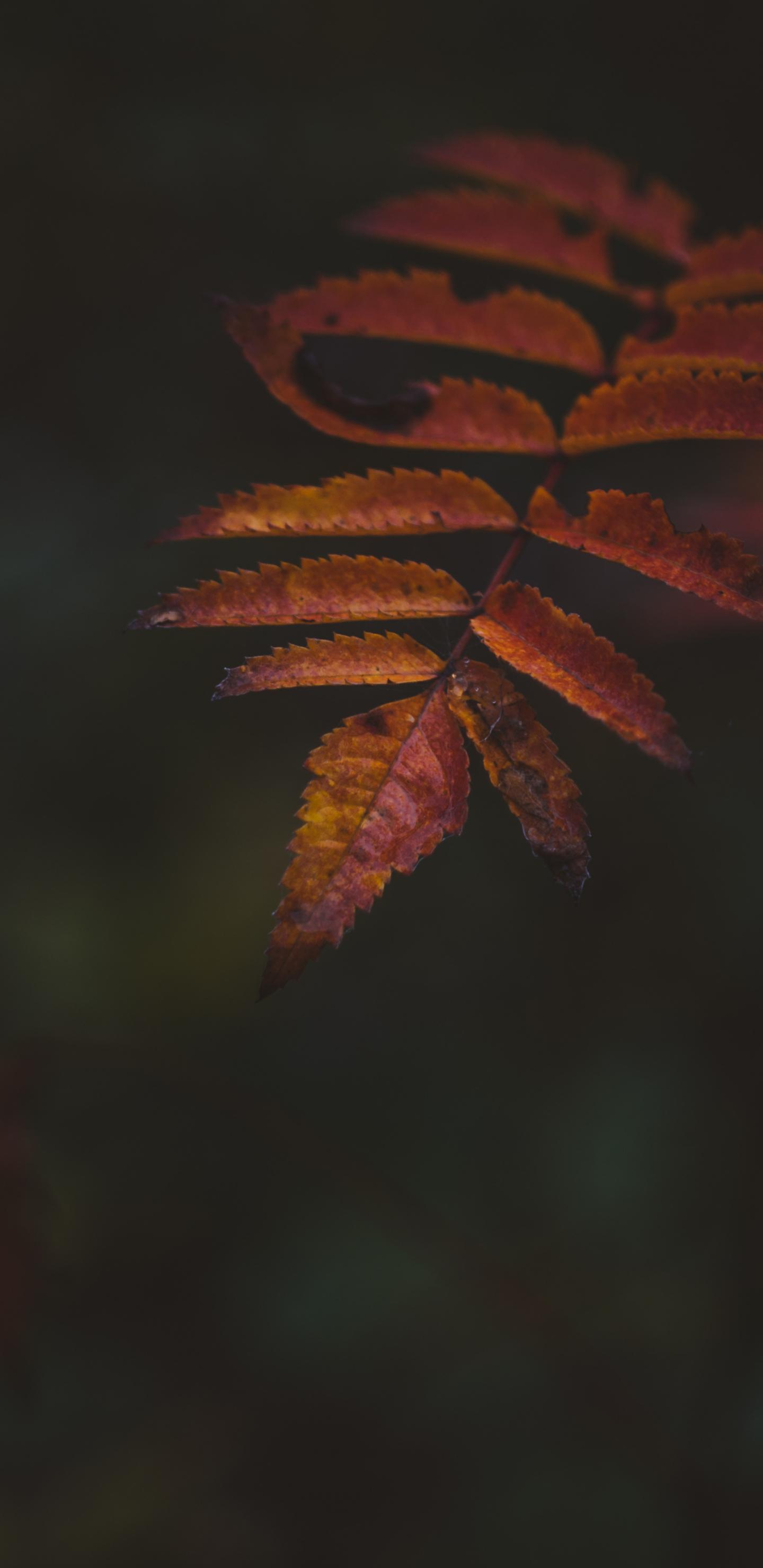 Autumn, portrait, leaf, 1440x2960 wallpaper
