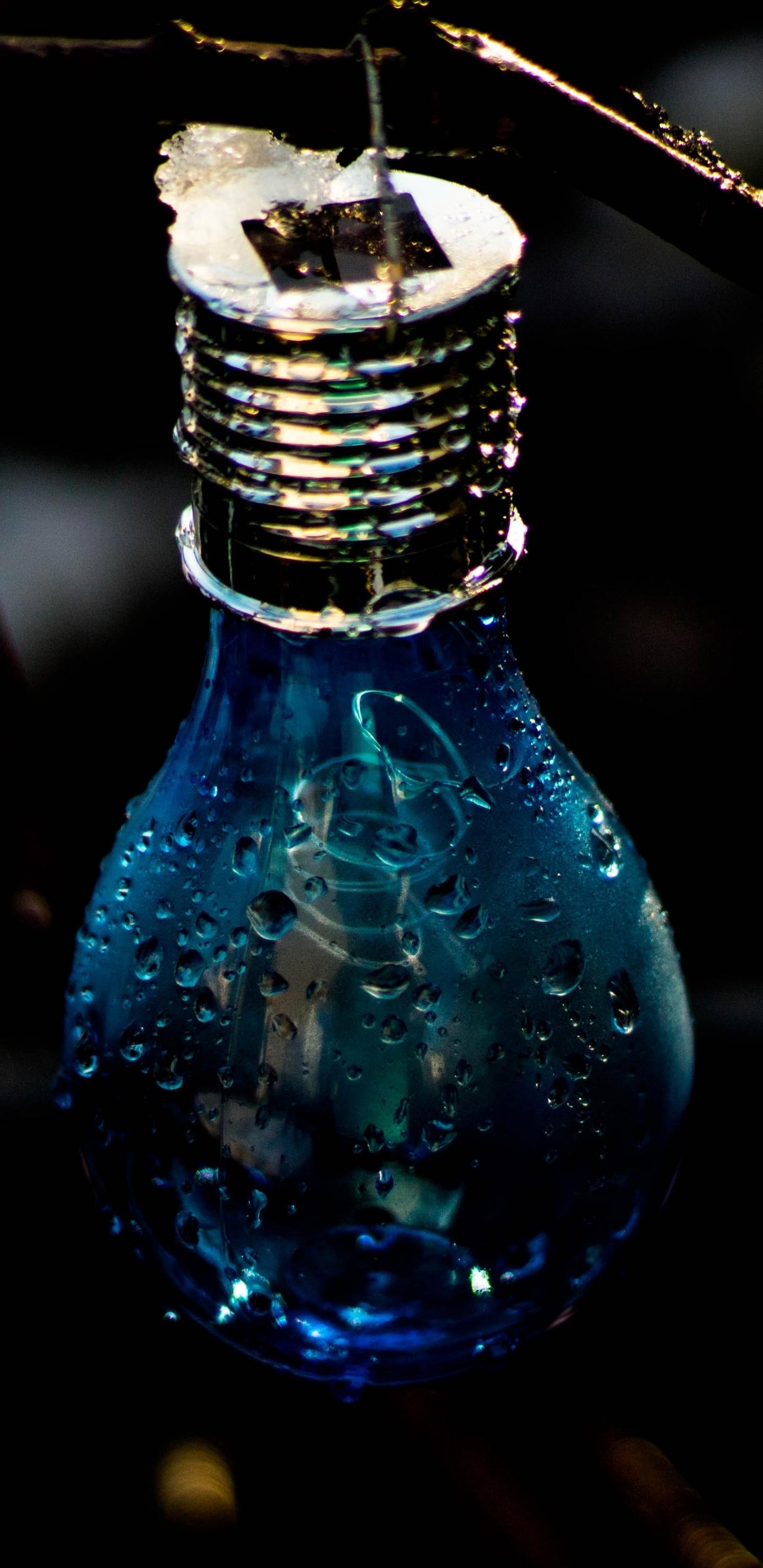 light bulb close up colors