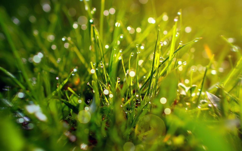 download 1440x900 wallpaper grass, morning, dew drops, blur, bokeh