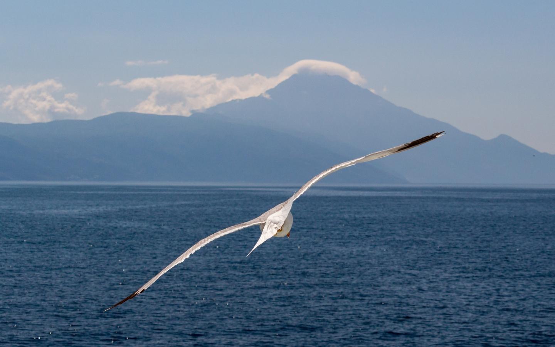 White bird, flight, sea, seagull, 1440x900 wallpaper