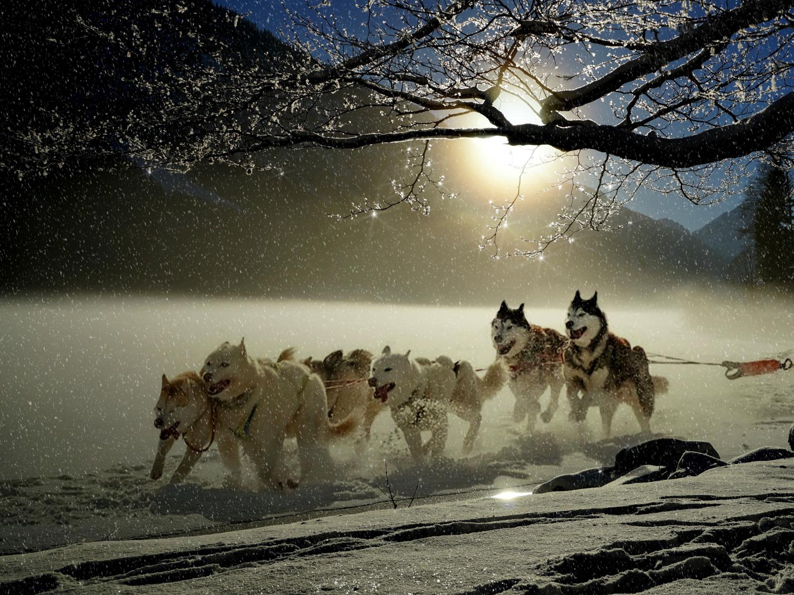 Dogs, run, winter, outdoor, 1600x1200 wallpaper