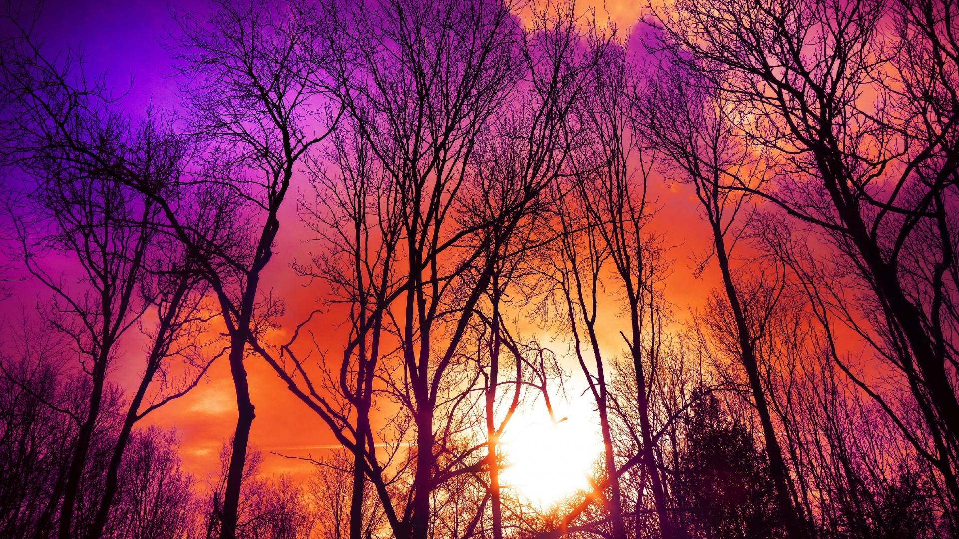 Download 1920x1080 Wallpaper Pink Skyline Tree Sky Sunset