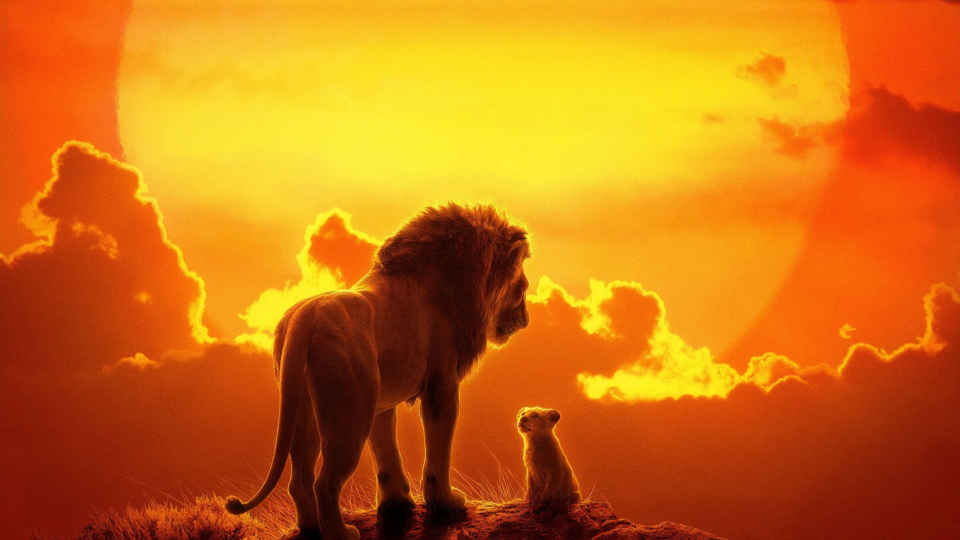 Download 1920x1080 Wallpaper The Lion King Lion And Cub
