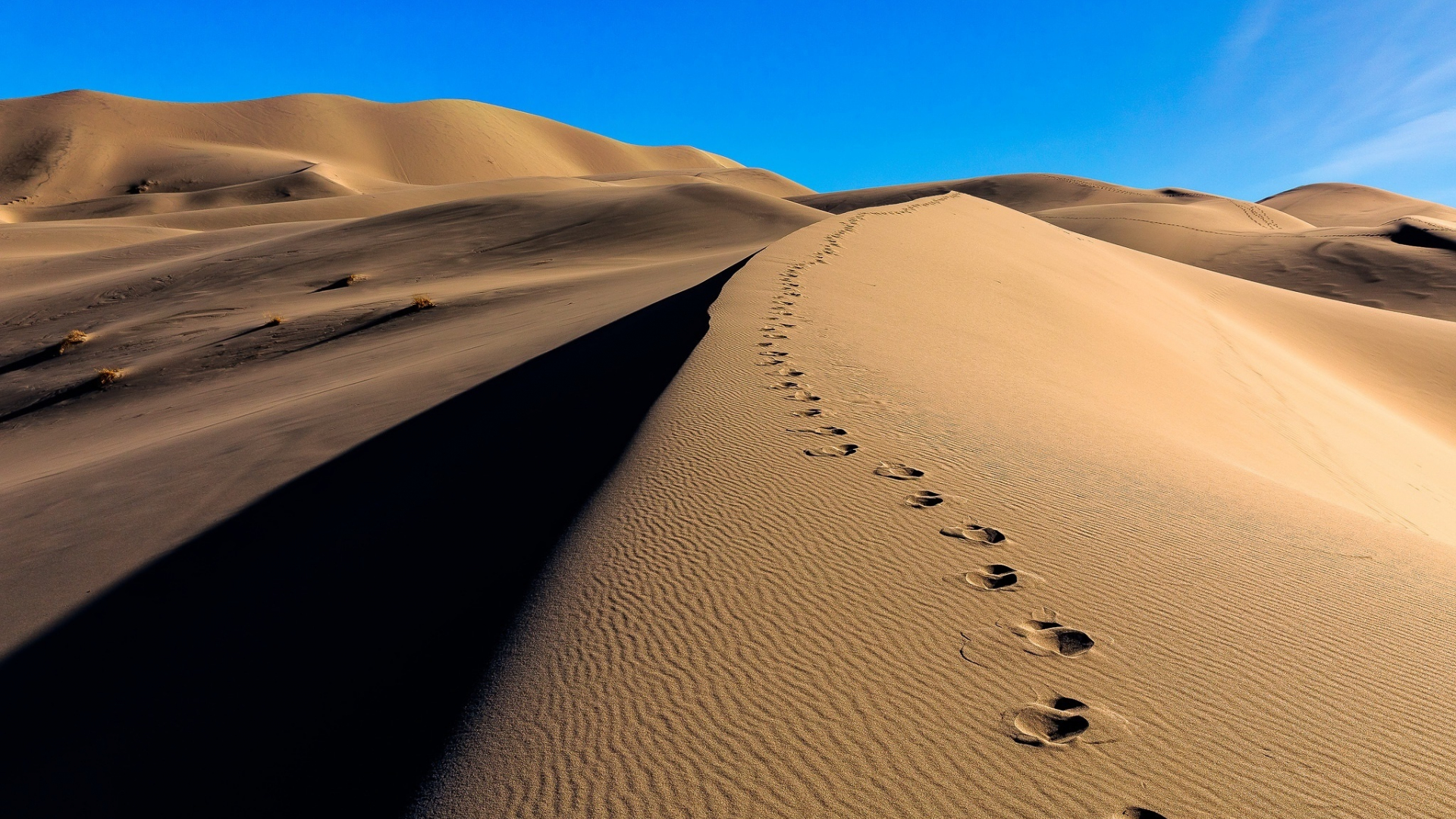 Download 1920x1080 Wallpaper Desert Camel S Footprint Sand Full Hd Hdtv Fhd 1080p 1920x1080 Hd Image Background 5523