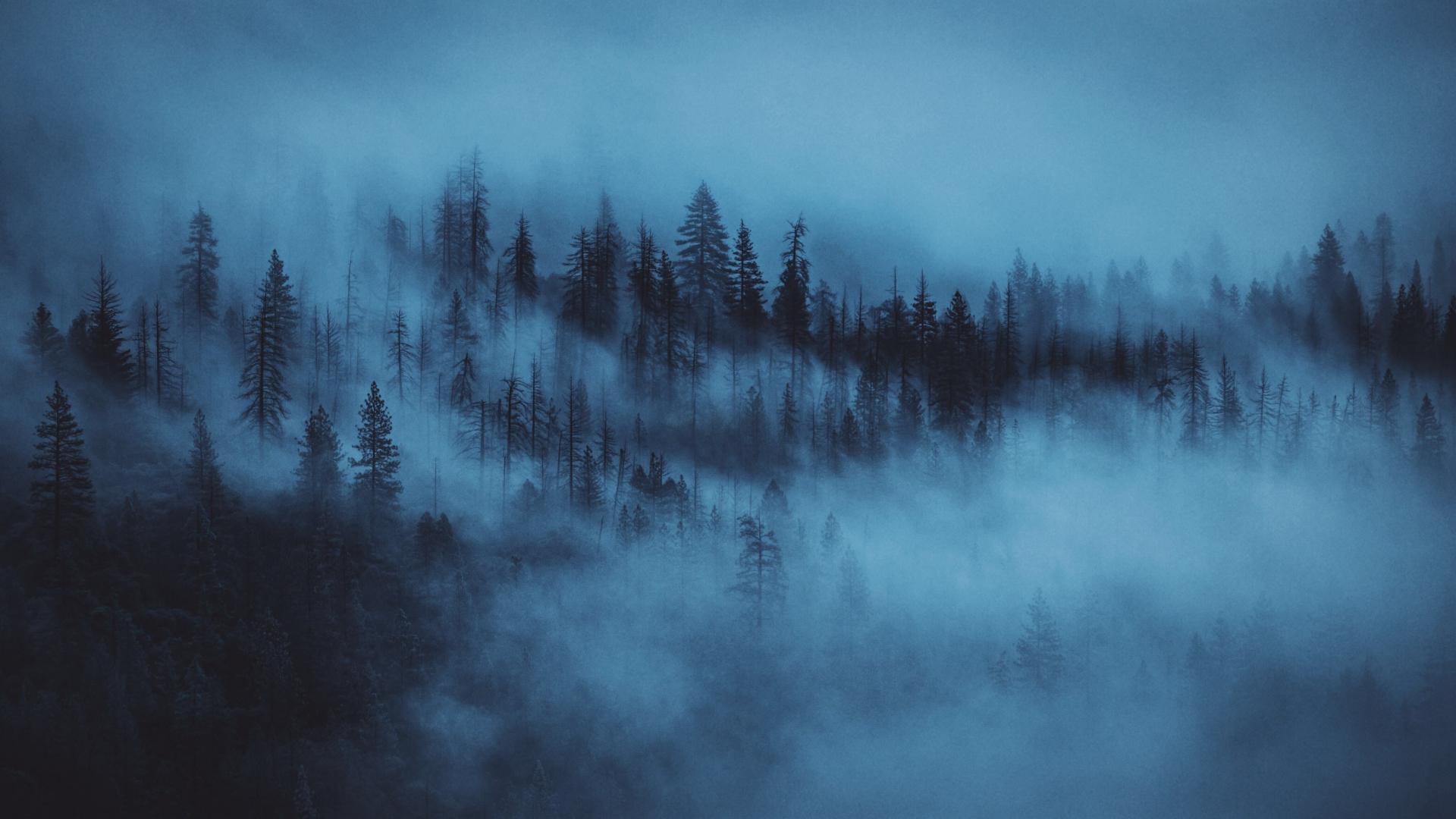 темный лес HD обои для рабочего стола: широкоформатный: высокой ... | 1080x1920