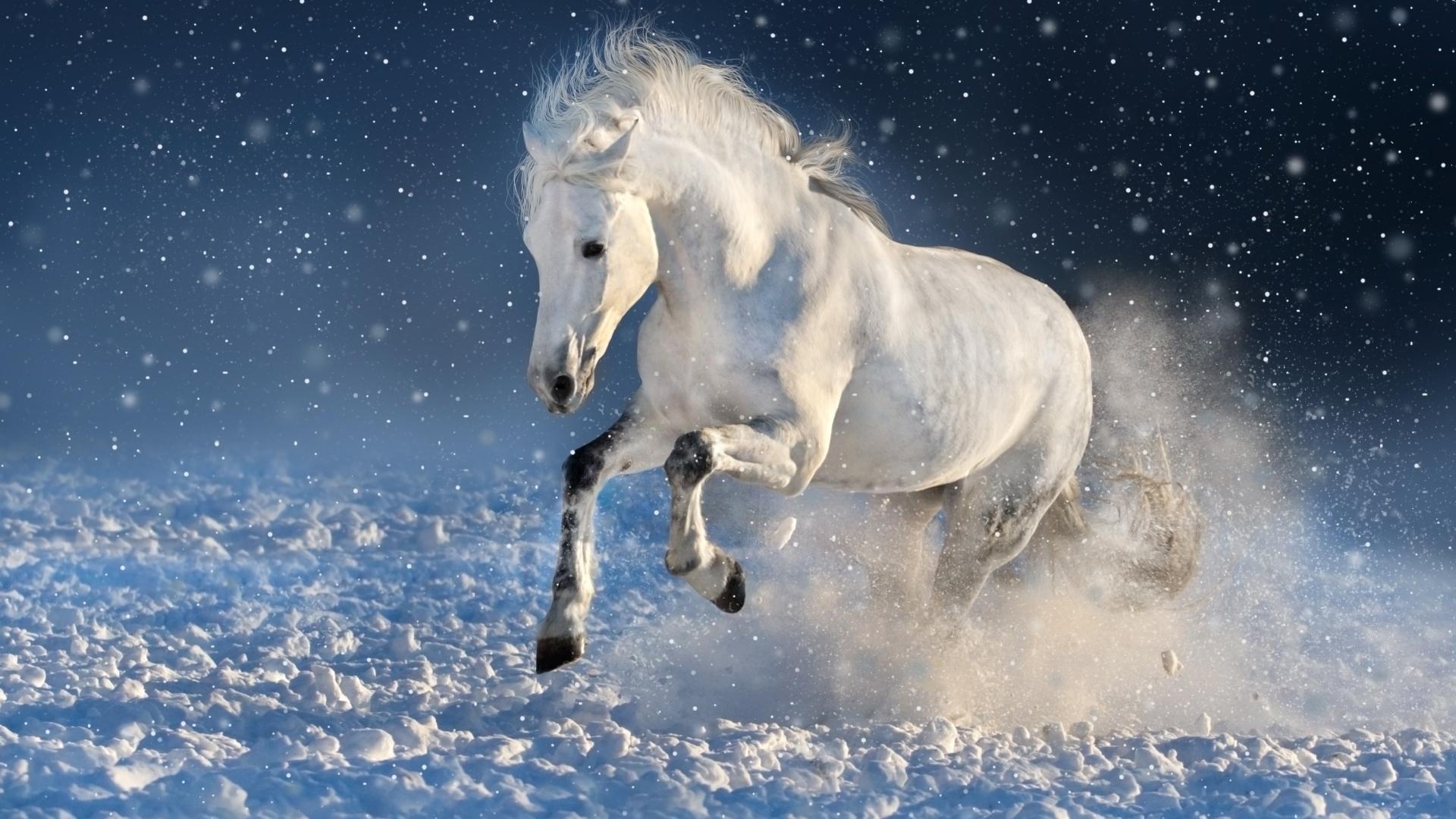 Download 1920x1080 Wallpaper White Horse Run Mammal Portrait