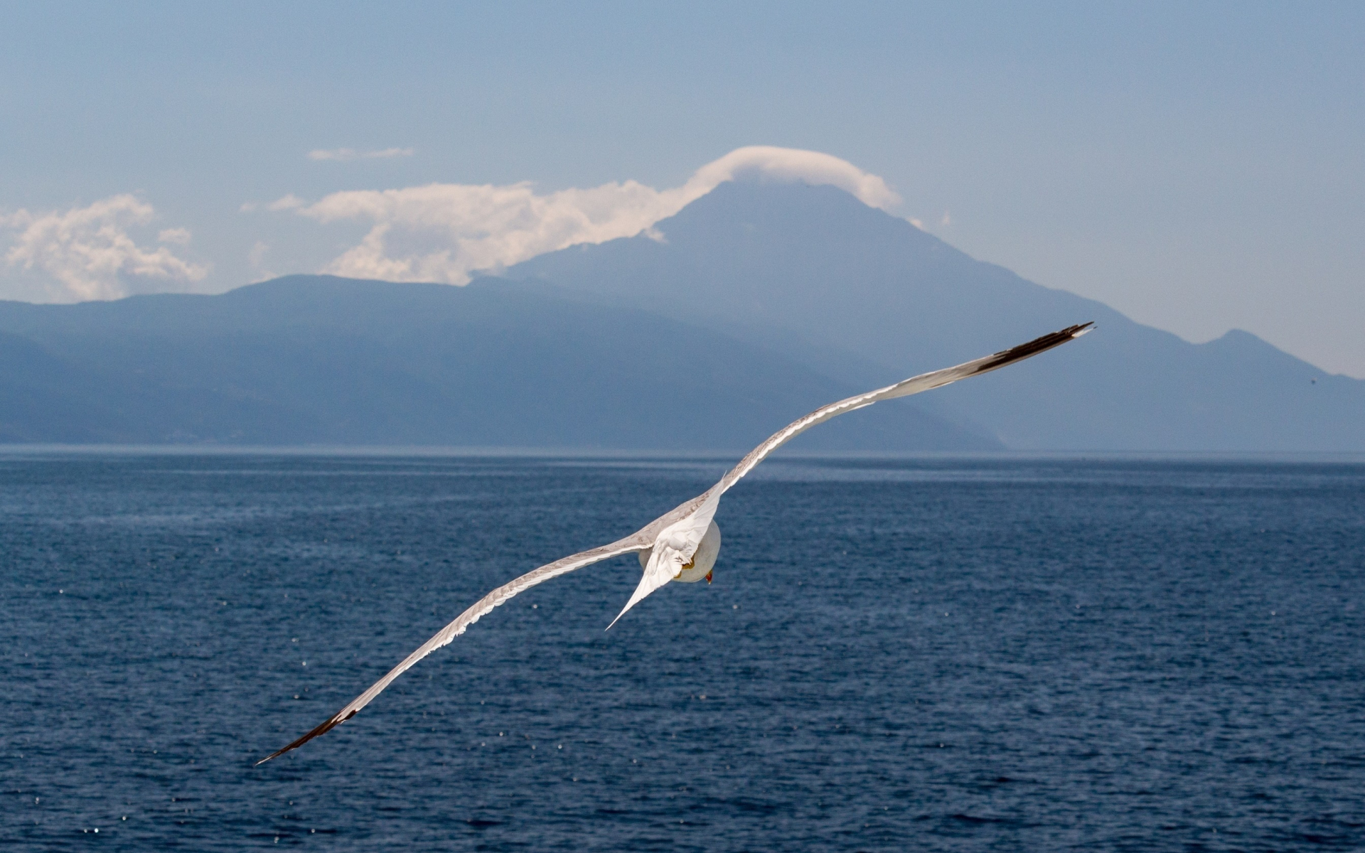 White bird, flight, sea, seagull, 1920x1200 wallpaper