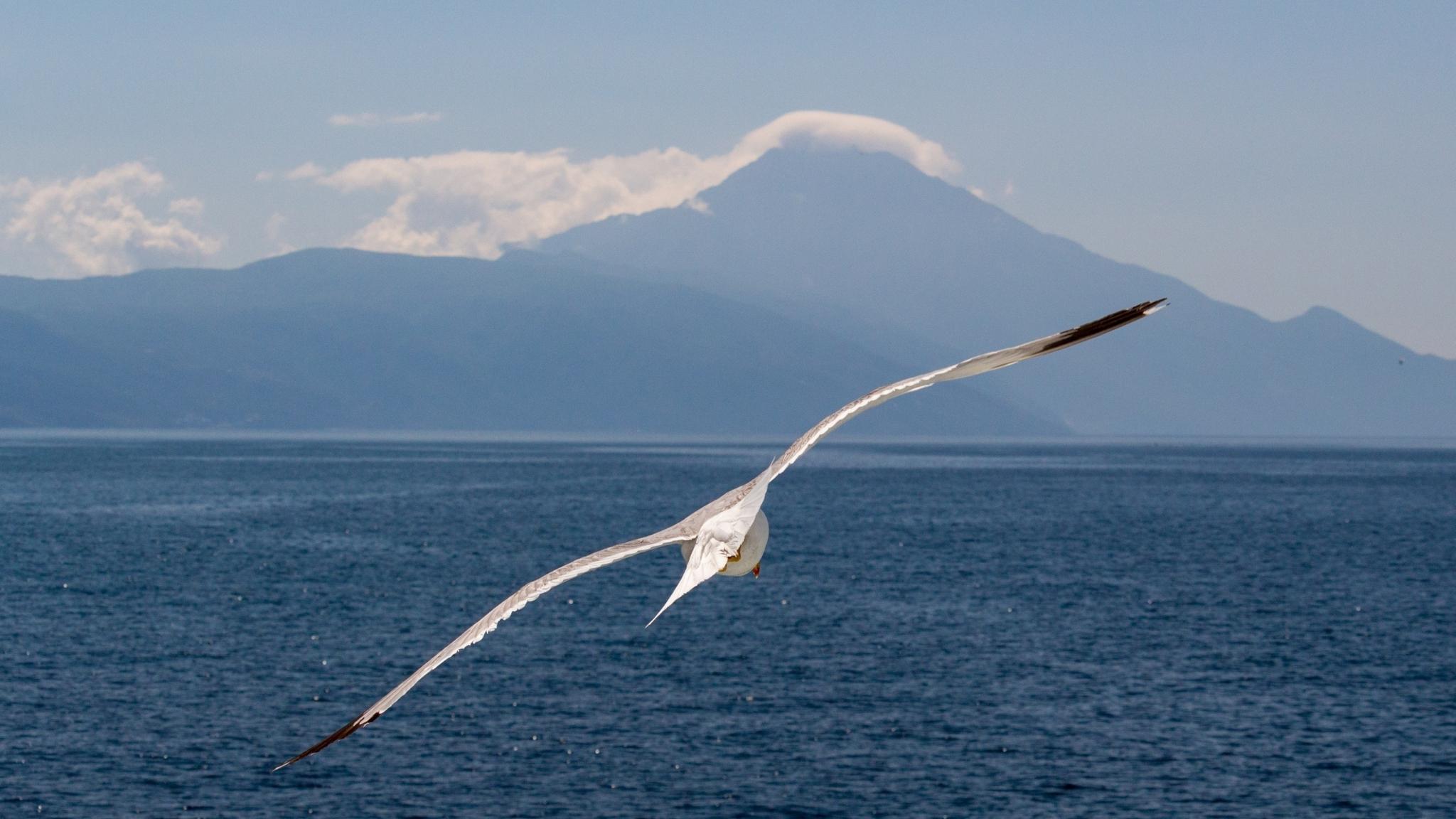 White bird, flight, sea, seagull, 2048x1152 wallpaper