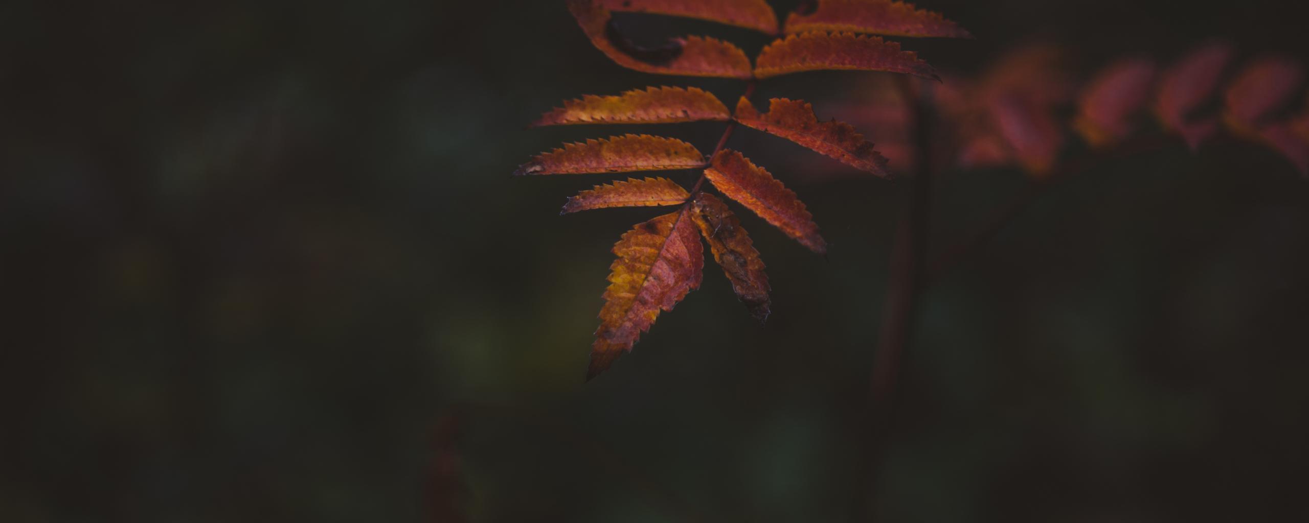 Autumn, portrait, leaf, 2560x1024 wallpaper