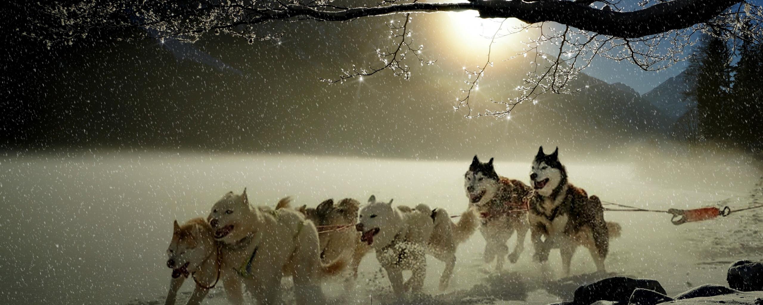 Dogs, run, winter, outdoor, 2560x1024 wallpaper