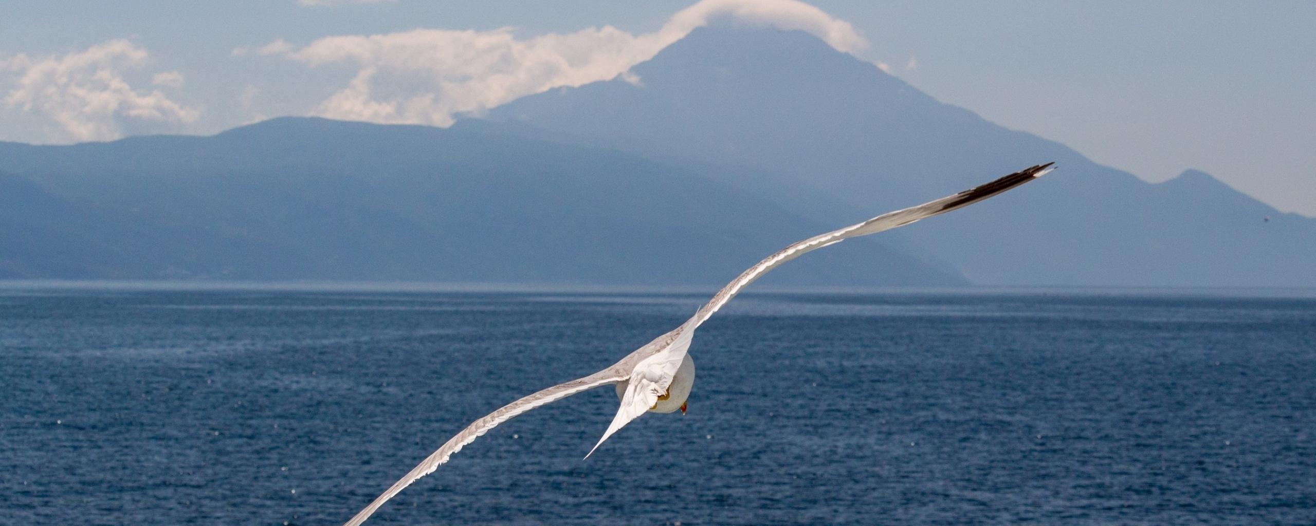 White bird, flight, sea, seagull, 2560x1024 wallpaper