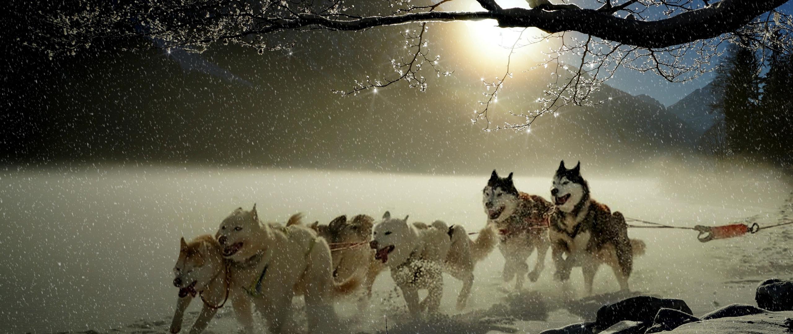 Dogs, run, winter, outdoor, 2560x1080 wallpaper