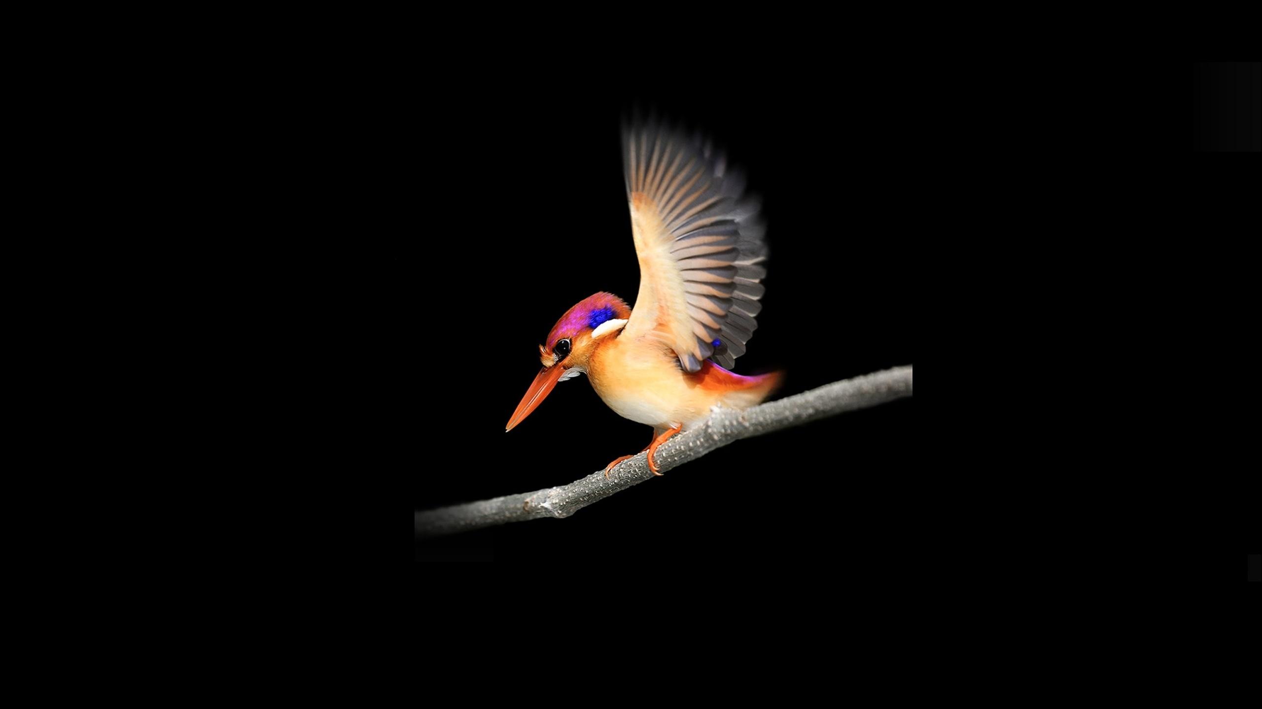 Download 2560x1440 Wallpaper Woodpecker Microsoft Surface