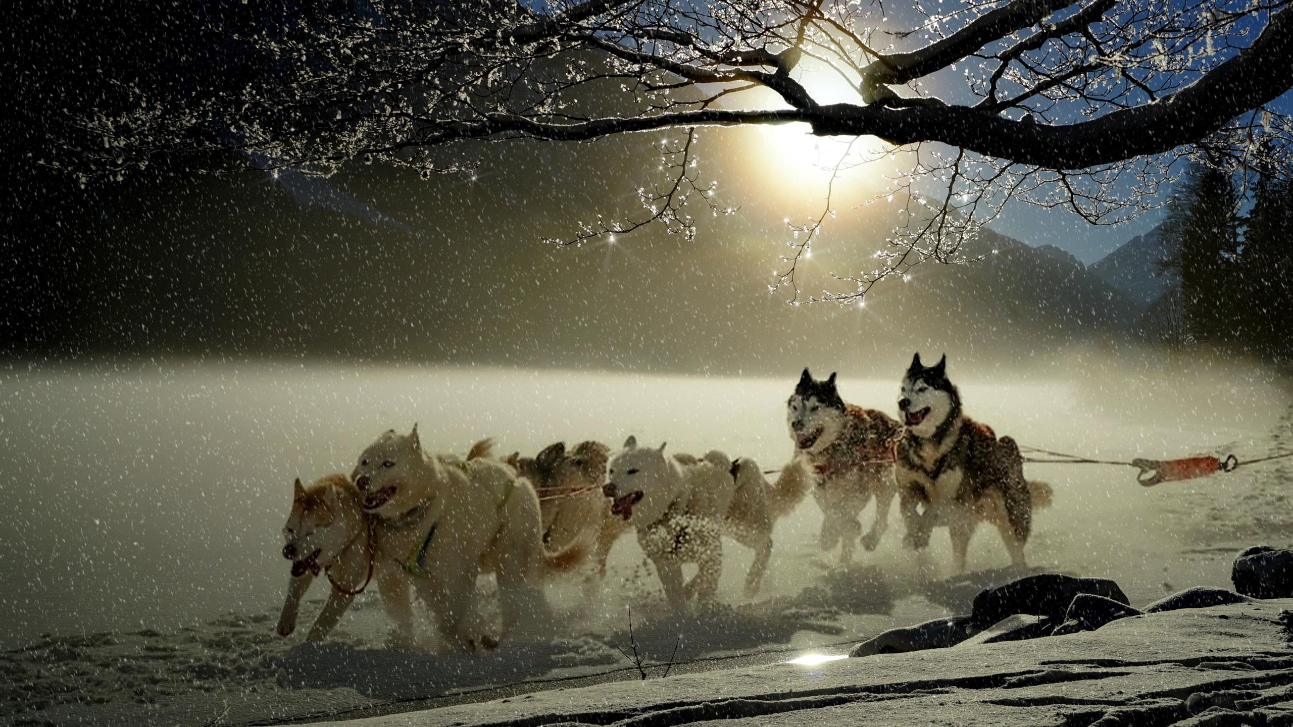 Dogs, run, winter, outdoor, 2560x1440 wallpaper