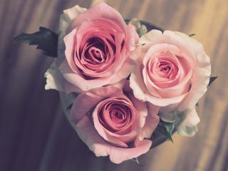 Bouquet, pink roses, bloom, 320x240 wallpaper