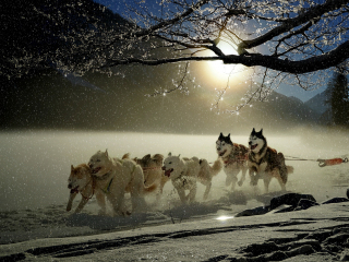 Dogs run winter outdoor