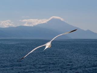 White bird, flight, sea, seagull, 320x240 wallpaper