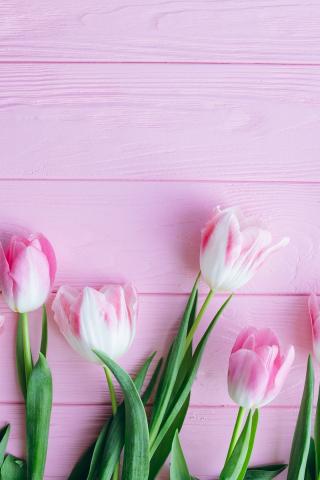 Tulip Flower Wallpaper For Mobile - Flowers Healthy